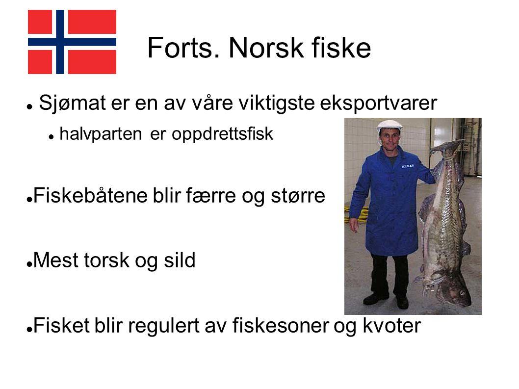 Forts. Norsk fiske Sjømat er en av våre viktigste eksportvarer halvparten er oppdrettsfisk Fiskebåtene blir færre og større Mest torsk og sild Fisket