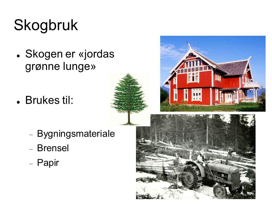 Skogbruk Skogen er «jordas grønne lunge» Brukes til:  Bygningsmateriale  Brensel  Papir