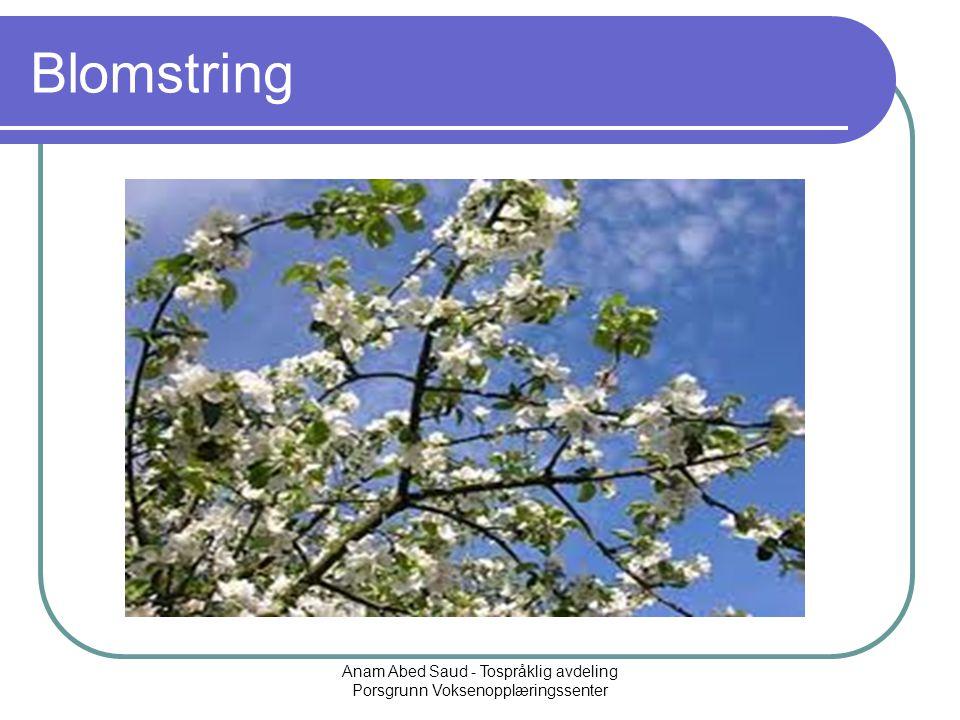 Anam Abed Saud - Tospråklig avdeling Porsgrunn Voksenopplæringssenter Blomstring
