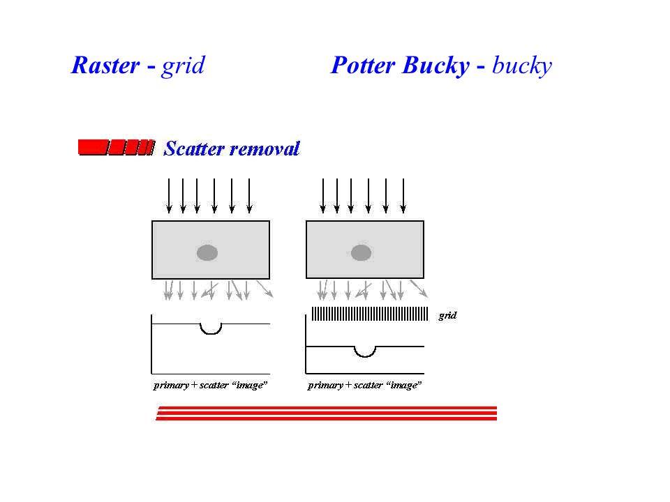 Raster - gridPotter Bucky - bucky