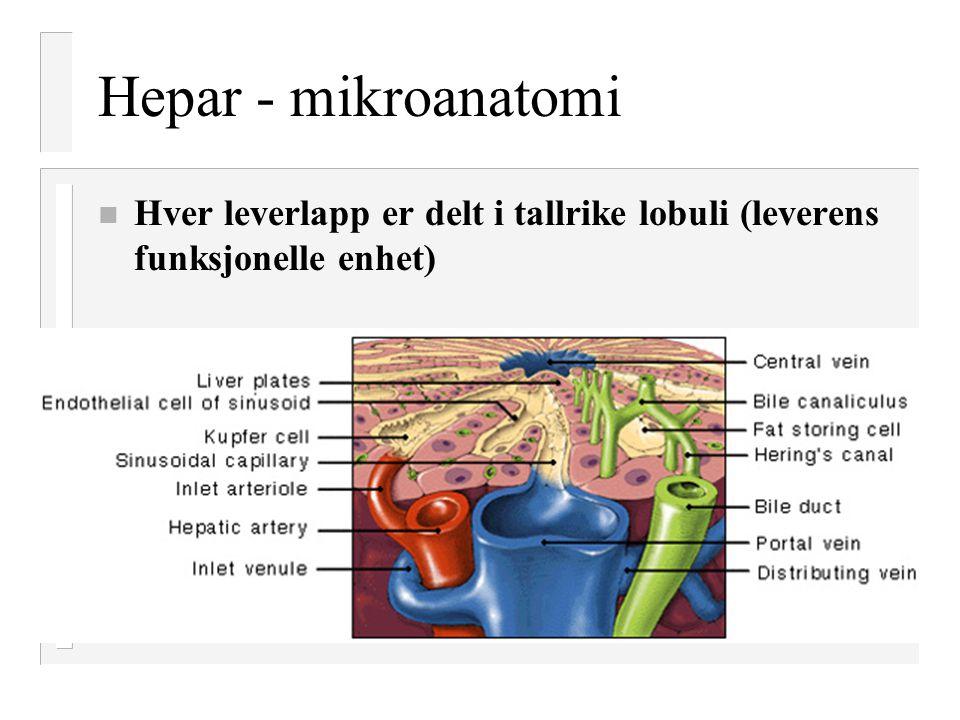 Hepar - mikroanatomi n Hver leverlapp er delt i tallrike lobuli (leverens funksjonelle enhet)