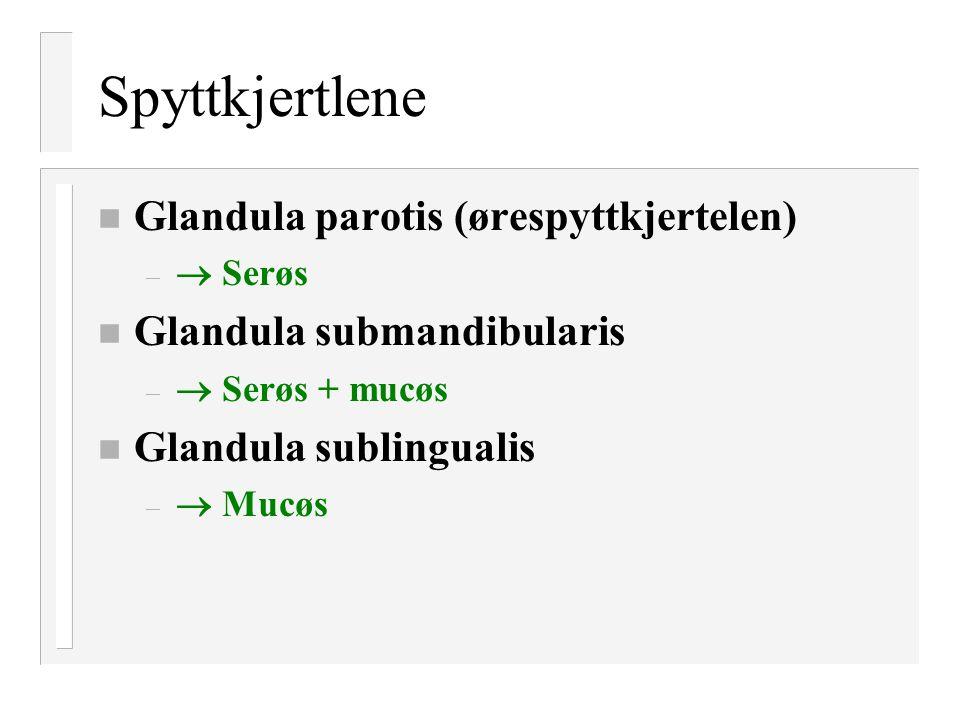 Spyttkjertlene n Glandula parotis (ørespyttkjertelen) –  Serøs n Glandula submandibularis –  Serøs + mucøs n Glandula sublingualis –  Mucøs