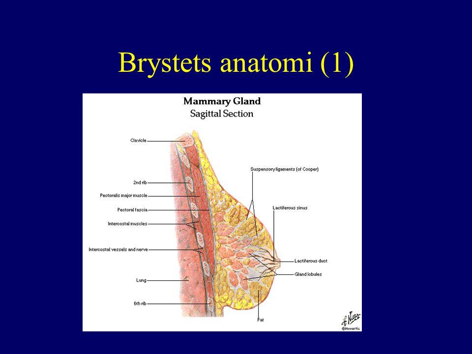 Brystets anatomi (1)