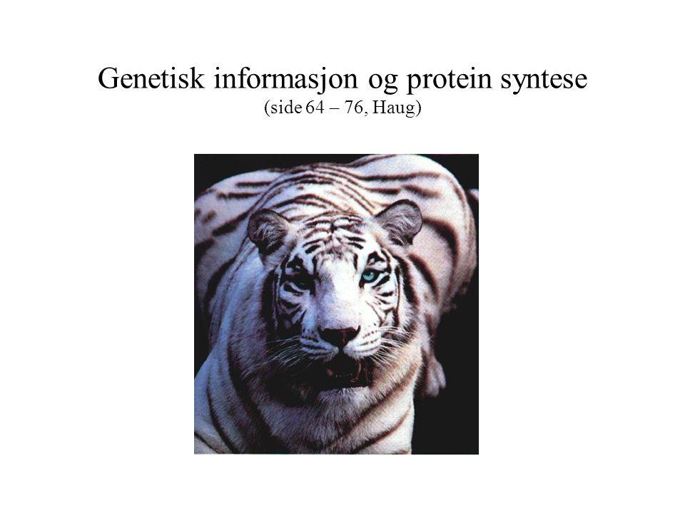 Proteinsyntese - Translasjon