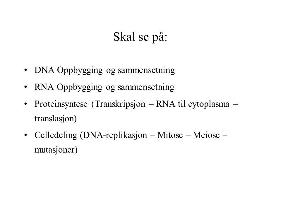 Skal se på: DNA Oppbygging og sammensetning RNA Oppbygging og sammensetning Proteinsyntese (Transkripsjon – RNA til cytoplasma – translasjon) Celledeling (DNA-replikasjon – Mitose – Meiose – mutasjoner)