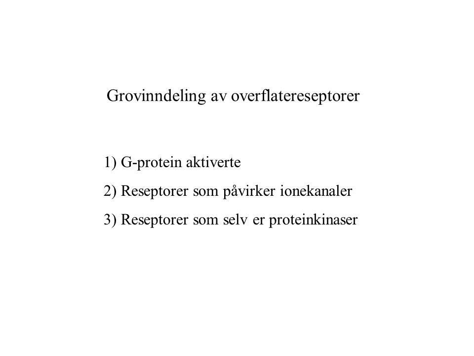 Grovinndeling av overflatereseptorer 1) G-protein aktiverte 2) Reseptorer som påvirker ionekanaler 3) Reseptorer som selv er proteinkinaser