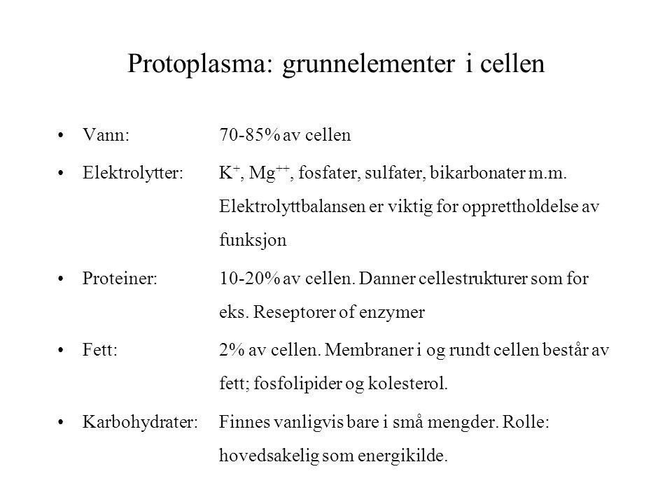 Protoplasma: grunnelementer i cellen Vann:70-85% av cellen Elektrolytter:K +, Mg ++, fosfater, sulfater, bikarbonater m.m. Elektrolyttbalansen er vikt