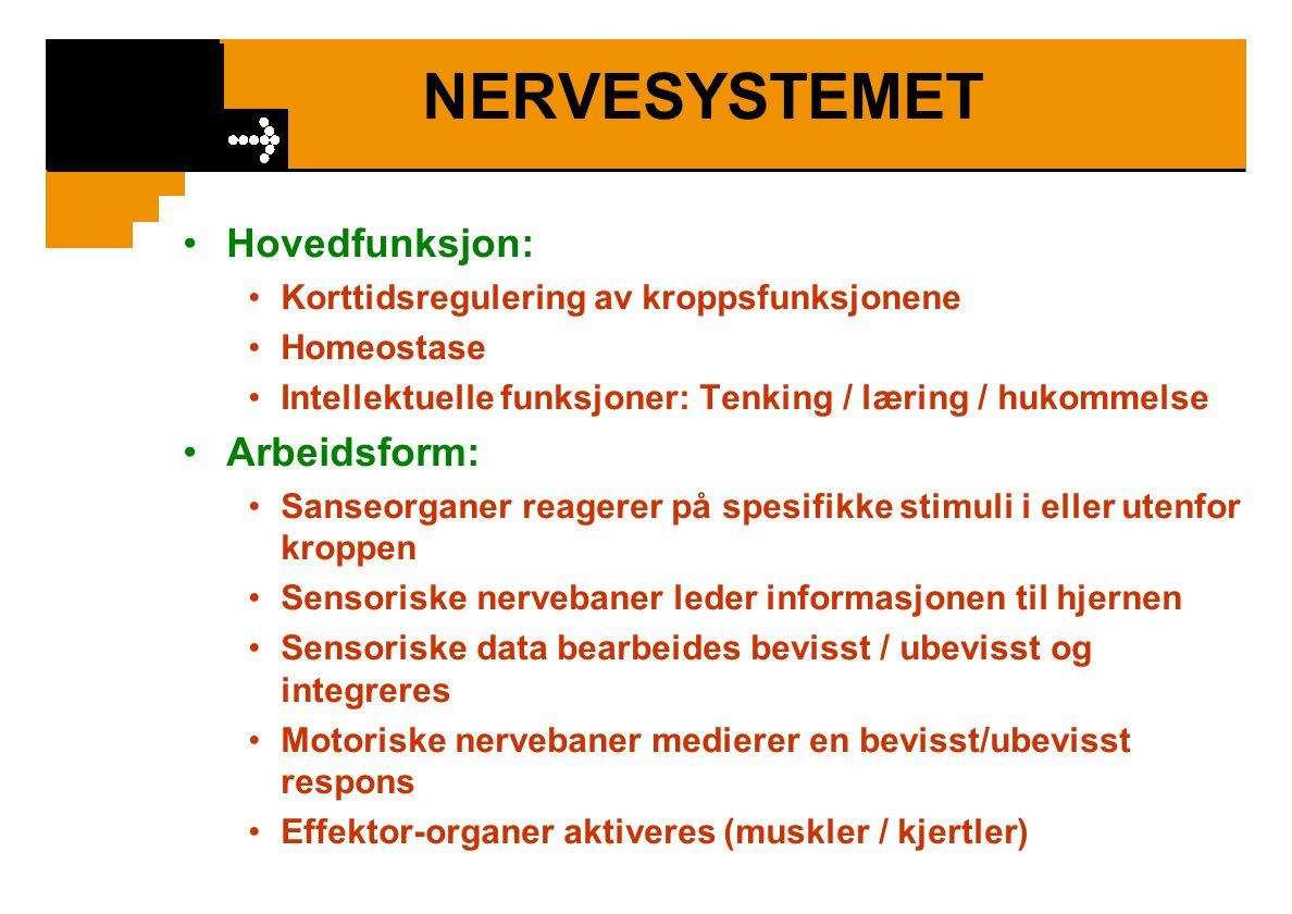 NERVESYSTEMET Hovedfunksjon: Korttidsregulering av kroppsfunksjonene Homeostase Intellektuelle funksjoner: Tenking / læring / hukommelse Arbeidsform: