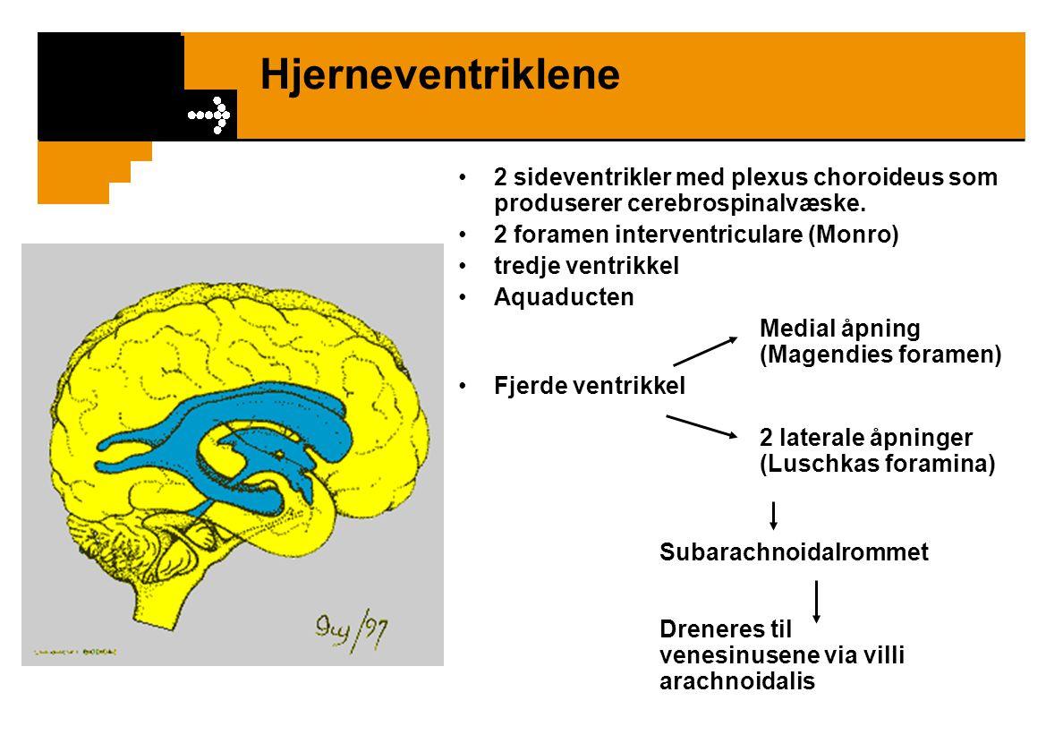 Hjerneventriklene 2 sideventrikler med plexus choroideus som produserer cerebrospinalvæske. 2 foramen interventriculare (Monro) tredje ventrikkel Aqua