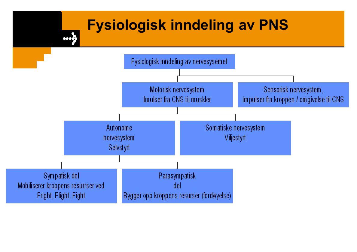 Nervesystemet inndeling