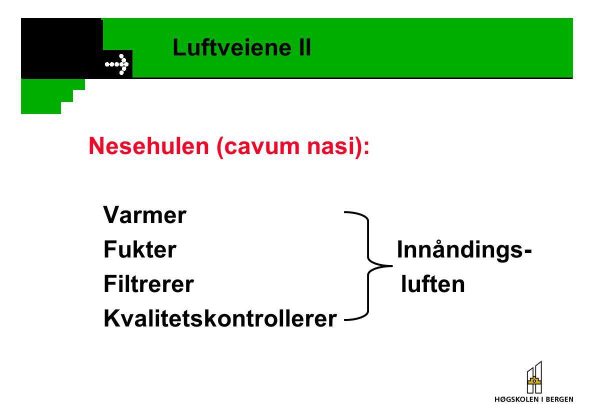 Luftveiene II Nesehulen (cavum nasi): Varmer Fukter Innåndings- Filtrerer luften Kvalitetskontrollerer