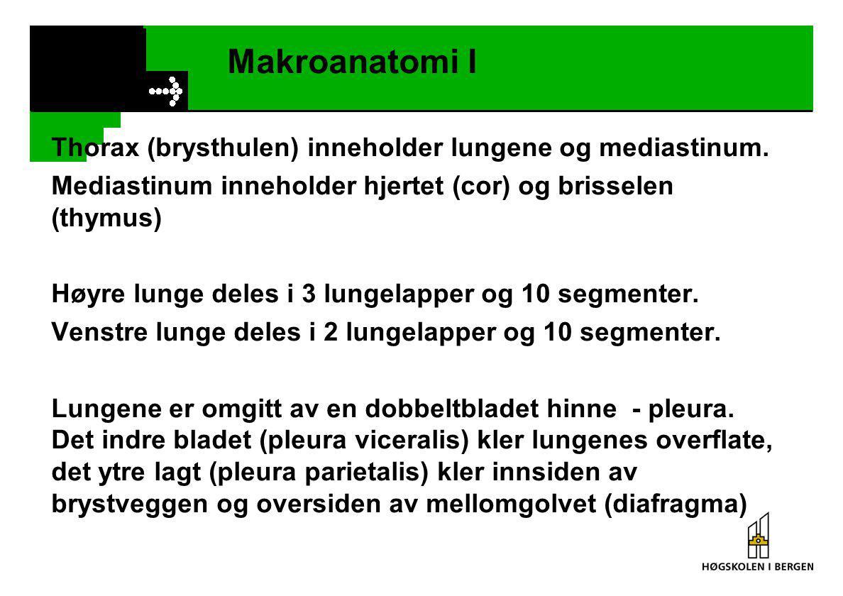Gasstransport - KARBONDIOKSYD Karbondioksyd transporteres i blodet: Fysisk løst i plasma (7 - 10 %) Bundet til proteindelen av hemoglobinet (10 - 20 %) Omdannet til HCO 3 - (bikarbonat) (60 -90 %) CO 2 + H 2 O  H 2 CO 3  H + + HCO 3 -