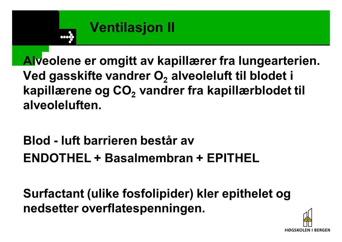 Ventilasjon III Respirasjonsvolumer: Tidevolum (0,5 l) + Ekspiratorisk reserve- volum (2 l) +Inspiratorisk reserve- volum (2,5 l) =Vitalkapasitet (5 l) +Residualvolum (1 l) = Totalvolum (6 l) Dødvolum /dead space) 150 ml