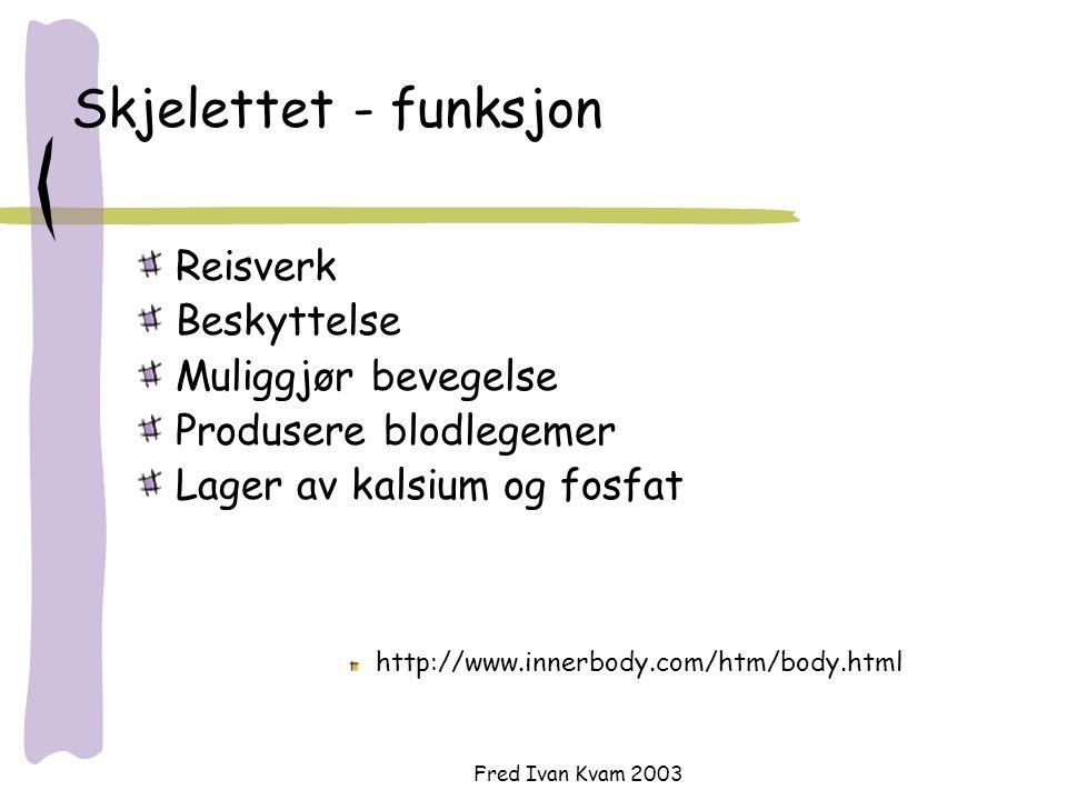 Fred Ivan Kvam 2003 Skjelettet - funksjon Reisverk Beskyttelse Muliggjør bevegelse Produsere blodlegemer Lager av kalsium og fosfat http://www.innerbo