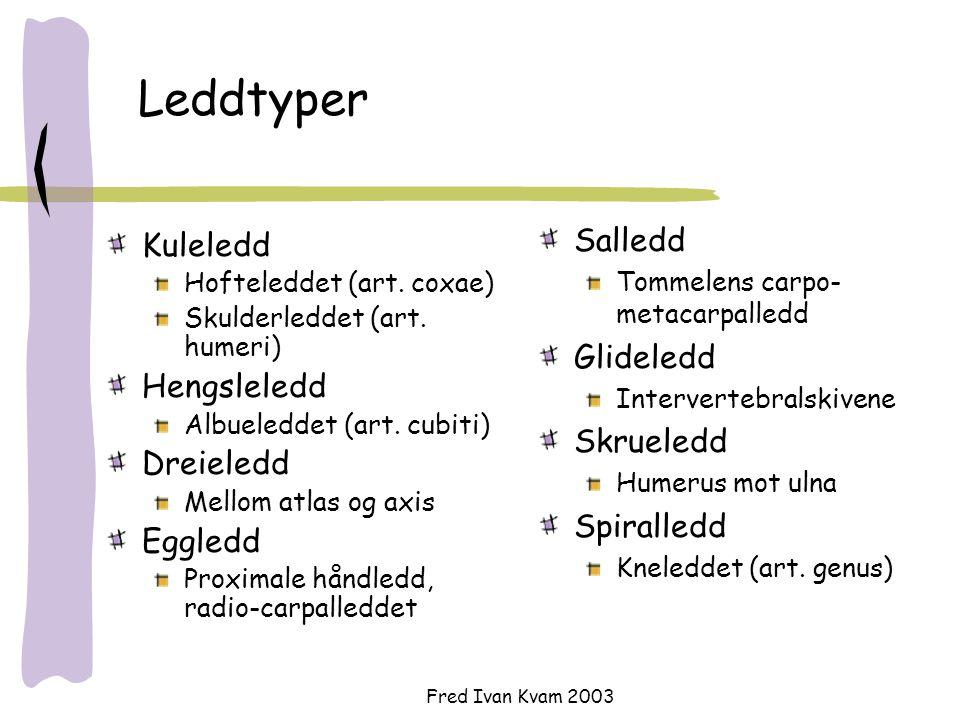 Fred Ivan Kvam 2003 Leddtyper Kuleledd Hofteleddet (art. coxae) Skulderleddet (art. humeri) Hengsleledd Albueleddet (art. cubiti) Dreieledd Mellom atl