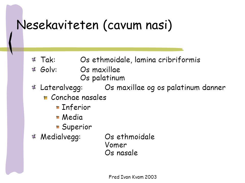 Fred Ivan Kvam 2003 Nesekaviteten (cavum nasi) Tak: Os ethmoidale, lamina cribriformis Golv: Os maxillae Os palatinum Lateralvegg:Os maxillae og os pa