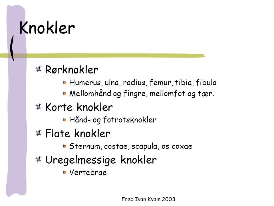 Fred Ivan Kvam 2003 Knokler Rørknokler Humerus, ulna, radius, femur, tibia, fibula Mellomhånd og fingre, mellomfot og tær. Korte knokler Hånd- og fotr