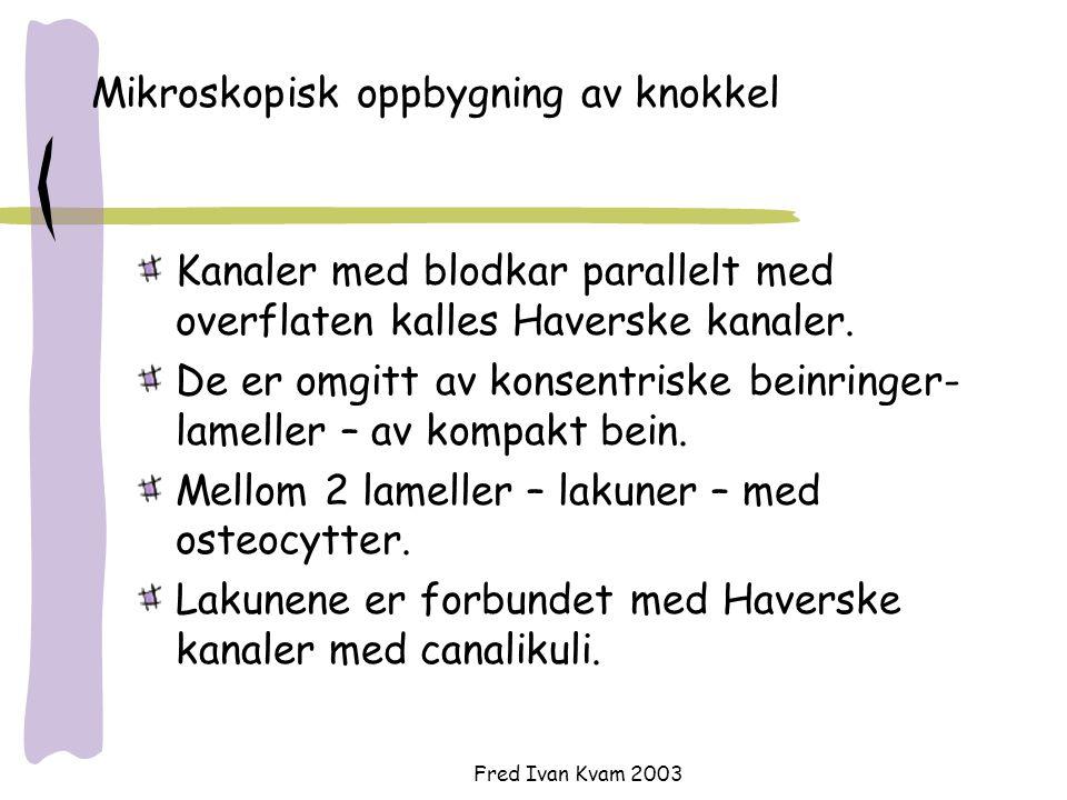 Fred Ivan Kvam 2003 Remodellereing av beinvev (3-6 mnd) 1.