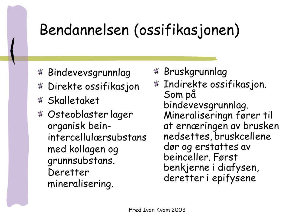 Fred Ivan Kvam 2003 Bendannelsen (ossifikasjonen) Bindevevsgrunnlag Direkte ossifikasjon Skalletaket Osteoblaster lager organisk bein- intercellulærsu