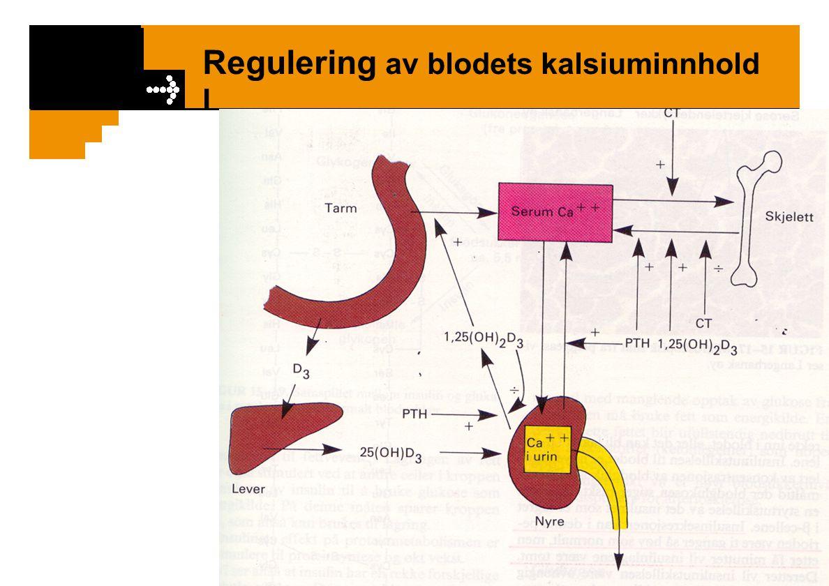 Regulering av blodets kalsiuminnhold I