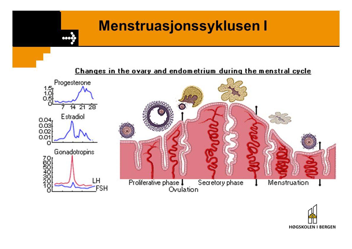 Menstruasjonssyklusen I