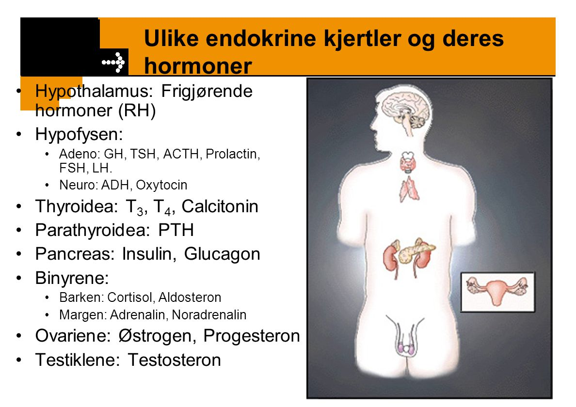 Ulike endokrine kjertler og deres hormoner Hypothalamus: Frigjørende hormoner (RH) Hypofysen: Adeno: GH, TSH, ACTH, Prolactin, FSH, LH. Neuro: ADH, Ox