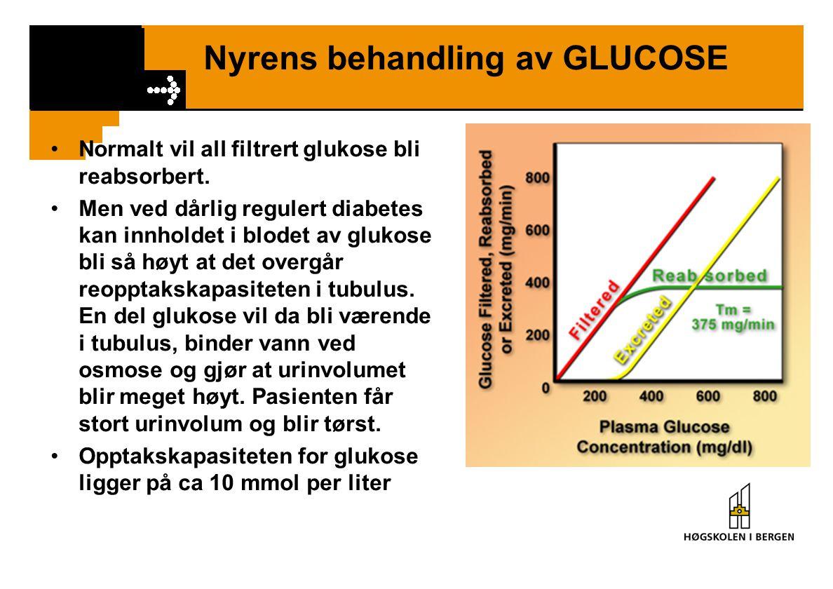 Nyrens behandling av GLUCOSE Normalt vil all filtrert glukose bli reabsorbert. Men ved dårlig regulert diabetes kan innholdet i blodet av glukose bli