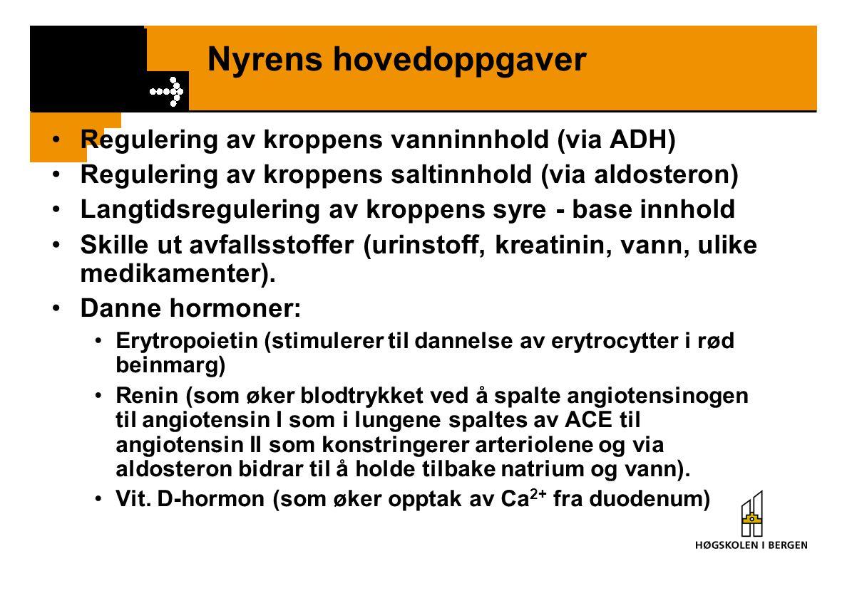 Nyrens hovedoppgaver Regulering av kroppens vanninnhold (via ADH) Regulering av kroppens saltinnhold (via aldosteron) Langtidsregulering av kroppens s