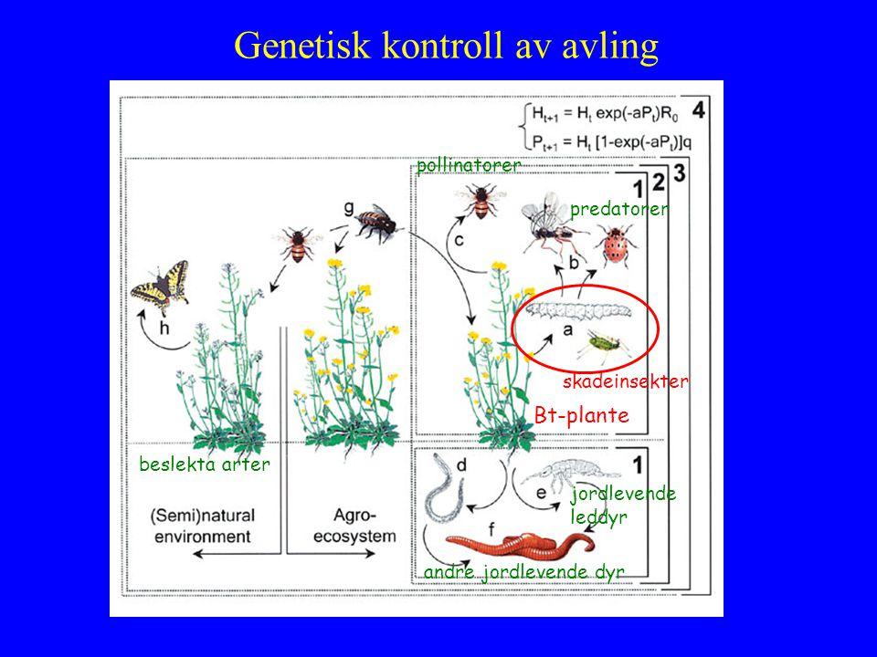 Genetisk kontroll av avling Bt-plante skadeinsekter pollinatorer predatorer jordlevende leddyr andre jordlevende dyr beslekta arter