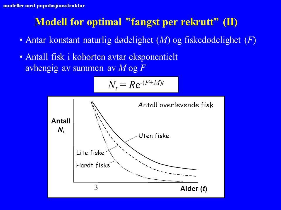 """Modell for optimal """"fangst per rekrutt"""" (II) Antar konstant naturlig dødelighet (M) og fiskedødelighet (F) Antall fisk i kohorten avtar eksponentielt"""