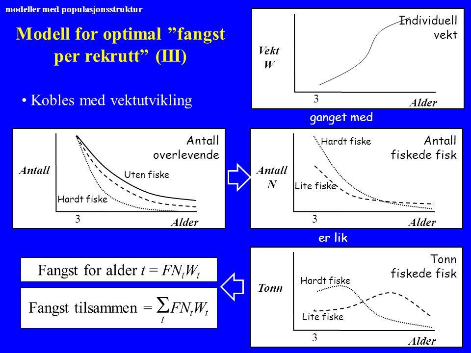 """Modell for optimal """"fangst per rekrutt"""" (III) Kobles med vektutvikling Vekt W ganget med Individuell vekt Alder 3 Antall Antall overlevende Alder 3 Ut"""