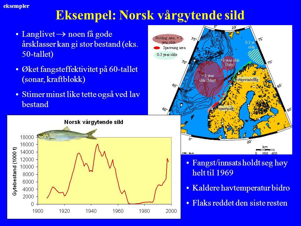 Eksempel: Norsk vårgytende sild Langlivet  noen få gode årsklasser kan gi stor bestand (eks. 50-tallet) Øket fangsteffektivitet på 60-tallet (sonar,