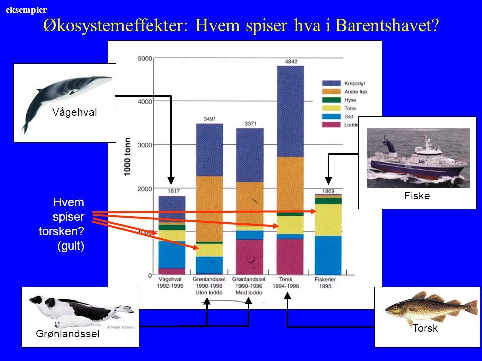 eksempler Økosystemeffekter: Hvem spiser hva i Barentshavet? Vågehval Fiske Grønlandssel Torsk Hvem spiser torsken? (gult)