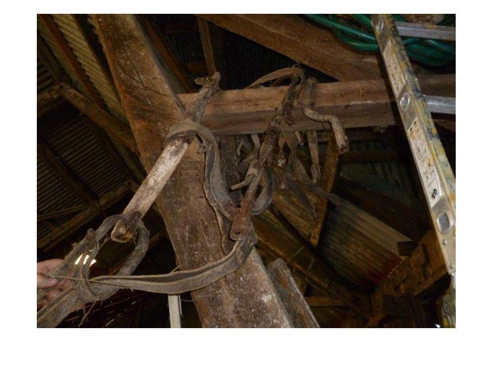 Potetplog (hest) Laget av jern.Ble brukt til å ta opp potet.