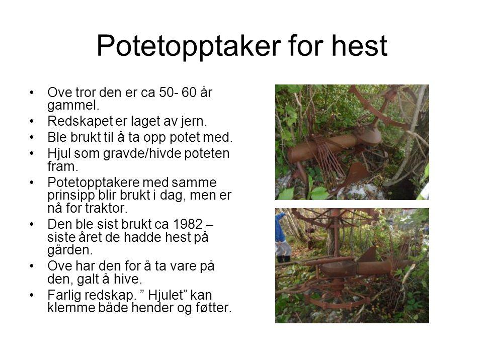 Potetopptaker for hest Ove tror den er ca 50- 60 år gammel.