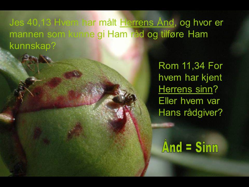 Jes 40,13 Hvem har målt Herrens Ånd, og hvor er mannen som kunne gi Ham råd og tilføre Ham kunnskap.