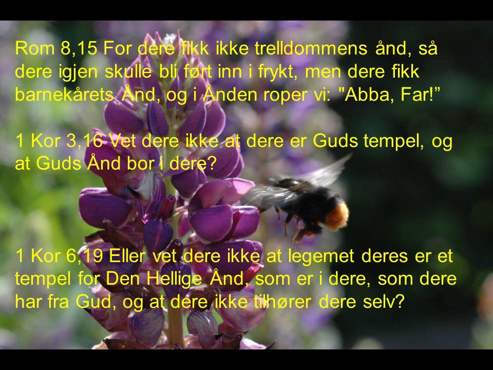Rom 8,15 For dere fikk ikke trelldommens ånd, så dere igjen skulle bli ført inn i frykt, men dere fikk barnekårets Ånd, og i Ånden roper vi: Abba, Far! 1 Kor 3,16 Vet dere ikke at dere er Guds tempel, og at Guds Ånd bor i dere.