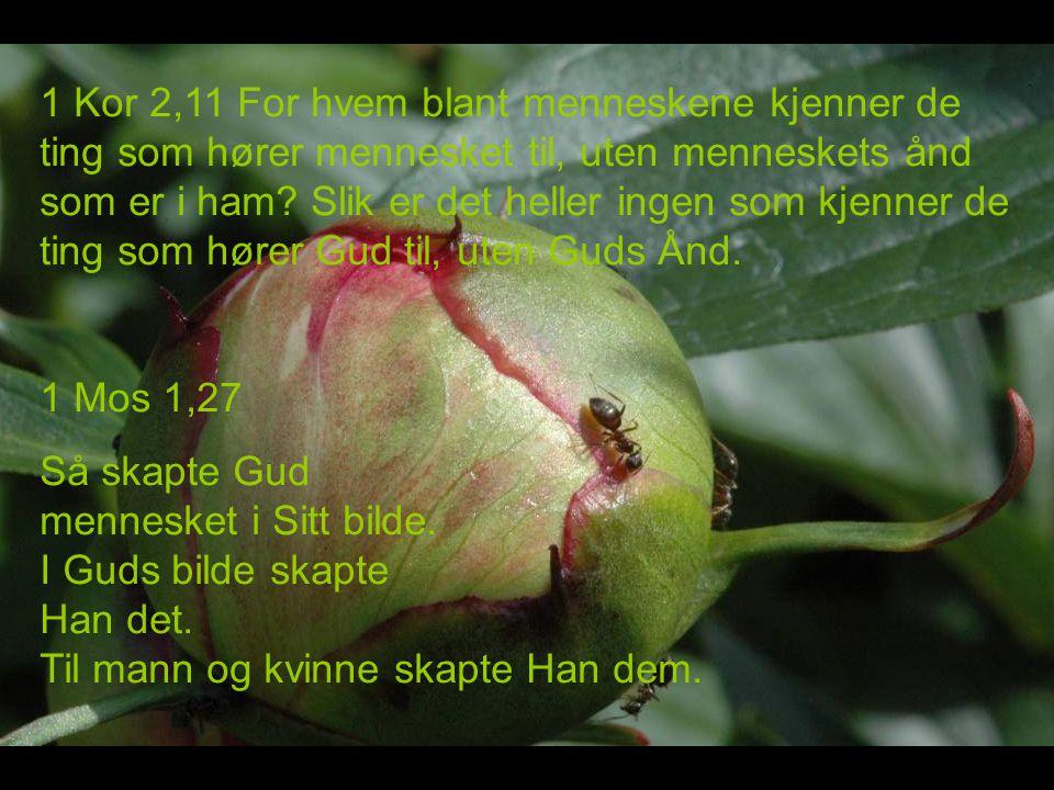 1 Kor 2,11 For hvem blant menneskene kjenner de ting som hører mennesket til, uten menneskets ånd som er i ham.