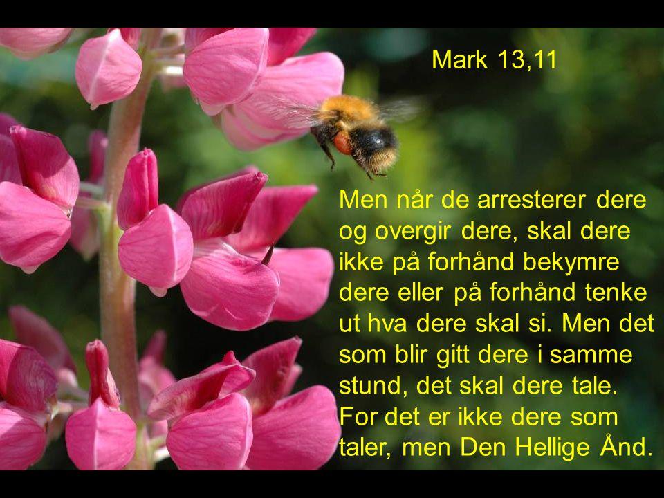 Mark 13,11 Men når de arresterer dere og overgir dere, skal dere ikke på forhånd bekymre dere eller på forhånd tenke ut hva dere skal si.