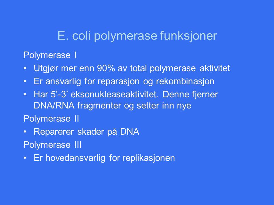 E. coli polymerase funksjoner Polymerase I Utgjør mer enn 90% av total polymerase aktivitet Er ansvarlig for reparasjon og rekombinasjon Har 5'-3' eks
