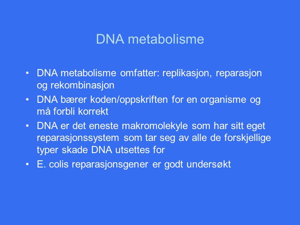 Replikasjonskomplekset Replikasjonskomplekset inneholder to polymerase III, en til hver av DNA-trådene Lagging strand legges i en løkke gjennom replikasjons- komplekset slik at syntesen av denne tråden holder tritt med leading strand Komplekset antas å være festet til cellemembranen og DNA føres gjennom for replikasjon Resultatet er rask koordinert syntese Ca.