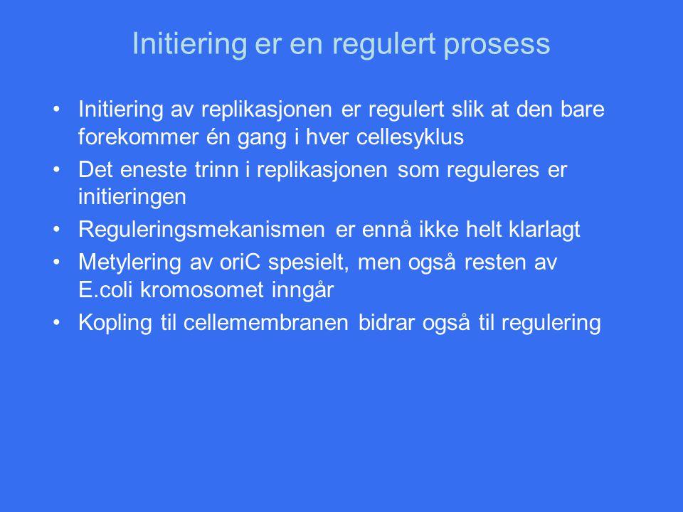 Initiering er en regulert prosess Initiering av replikasjonen er regulert slik at den bare forekommer én gang i hver cellesyklus Det eneste trinn i re
