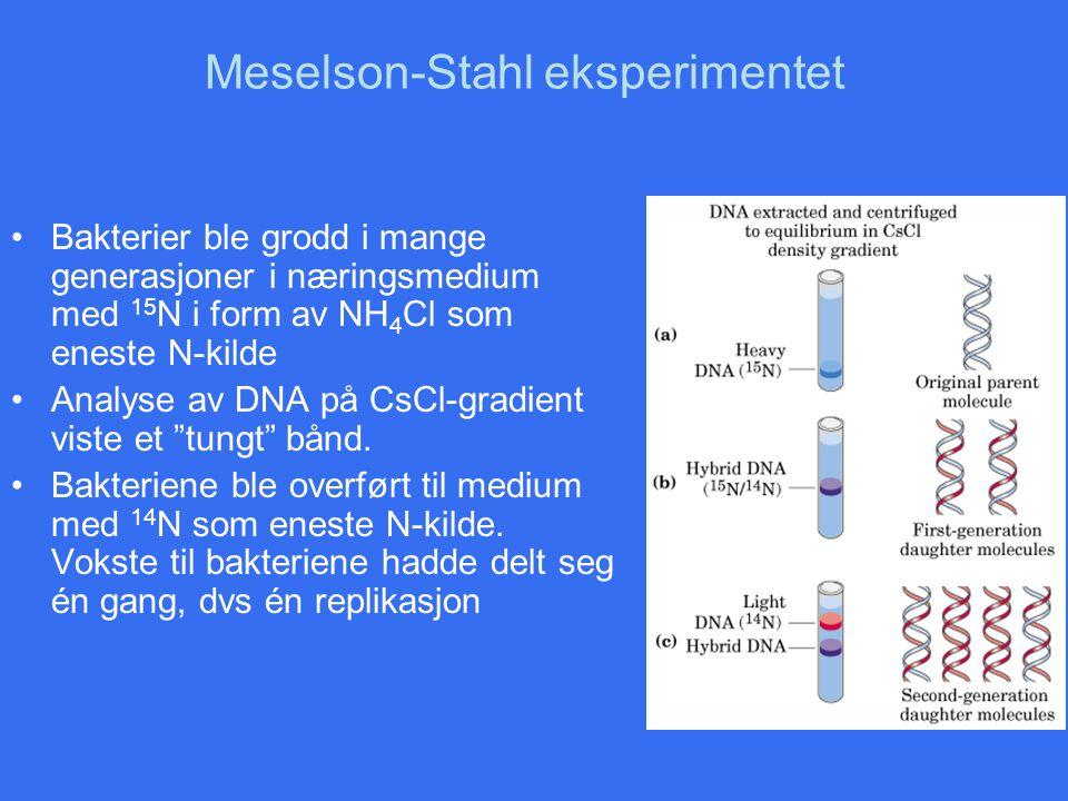 Meselson-Stahl eksperimentet Bakterier ble grodd i mange generasjoner i næringsmedium med 15 N i form av NH 4 Cl som eneste N-kilde Analyse av DNA på