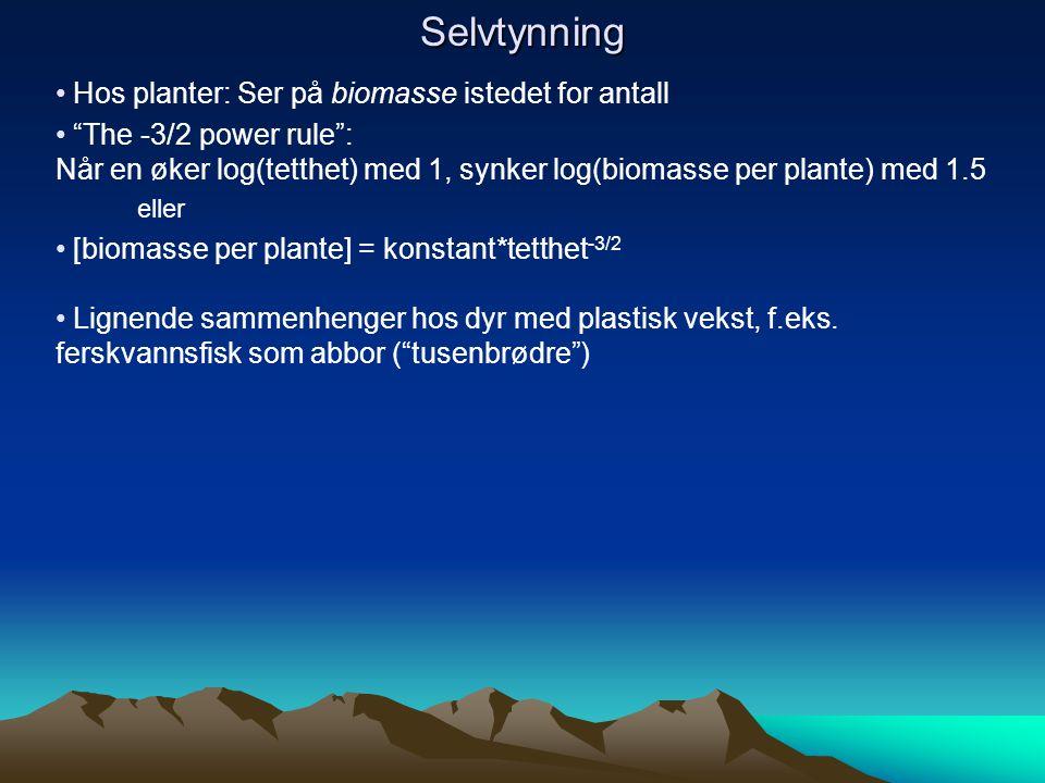 """Selvtynning Hos planter: Ser på biomasse istedet for antall """"The -3/2 power rule"""": Når en øker log(tetthet) med 1, synker log(biomasse per plante) med"""