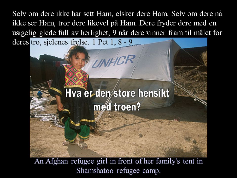 An Afghan refugee girl in front of her family s tent in Shamshatoo refugee camp.
