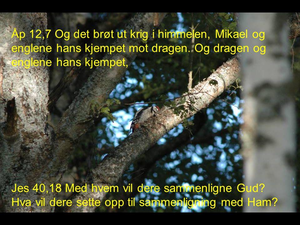 Åp 12,7 Og det brøt ut krig i himmelen, Mikael og englene hans kjempet mot dragen.