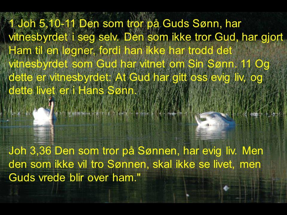 1 Joh 5,10-11 Den som tror på Guds Sønn, har vitnesbyrdet i seg selv.