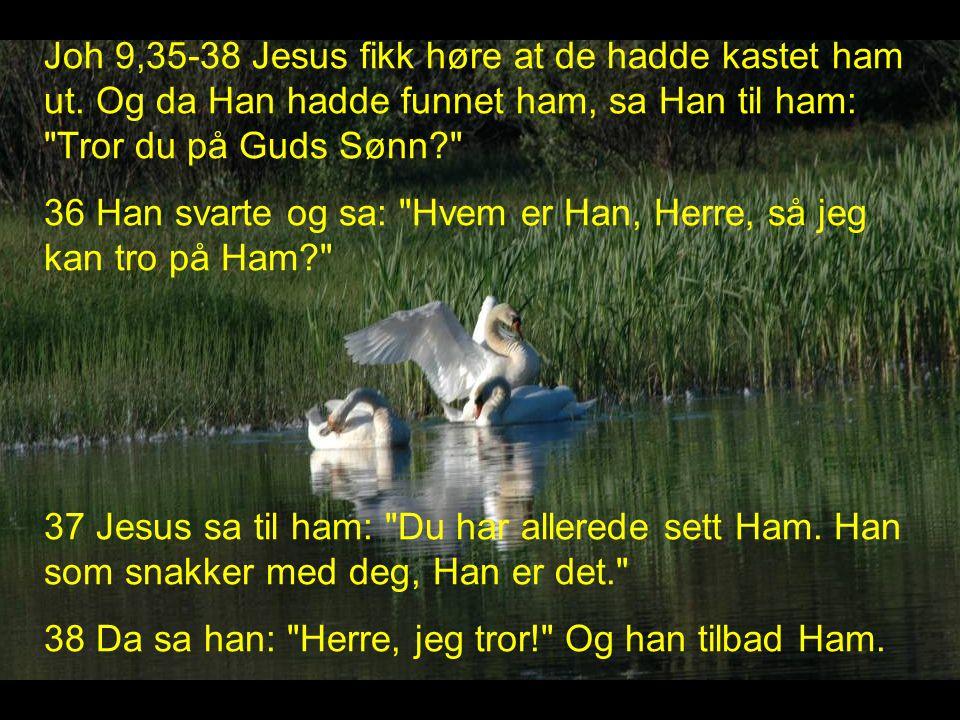 Joh 9,35-38 Jesus fikk høre at de hadde kastet ham ut.