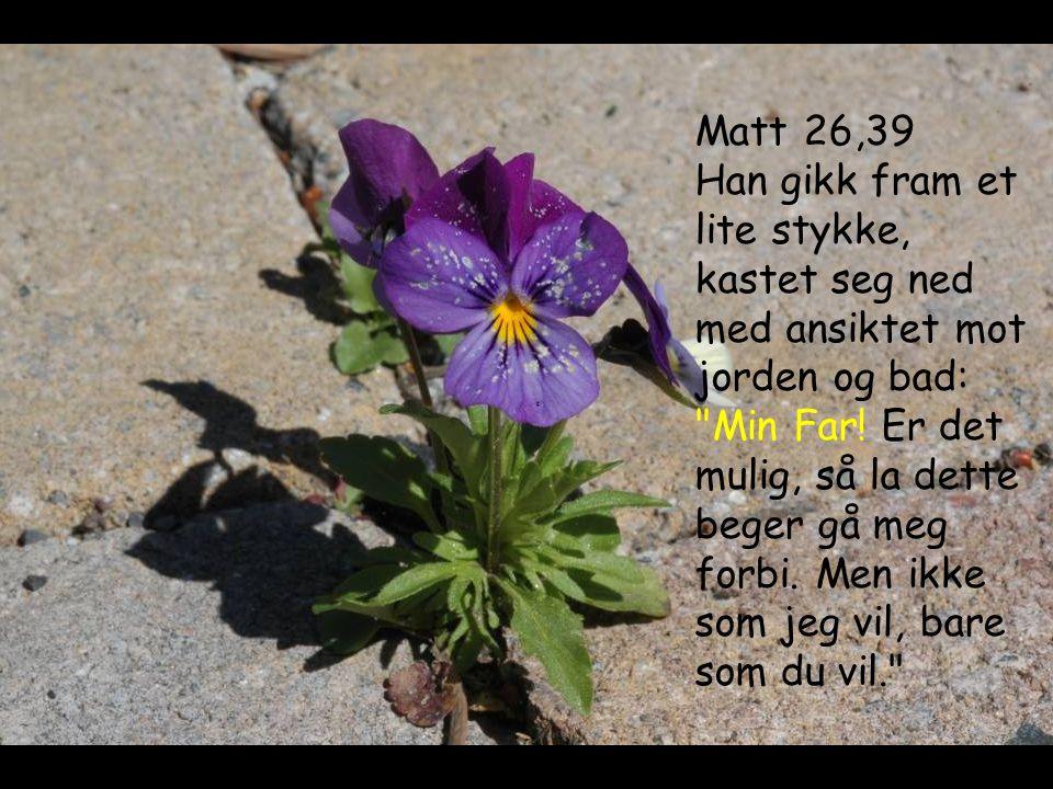 Matt 26,39 Han gikk fram et lite stykke, kastet seg ned med ansiktet mot jorden og bad: