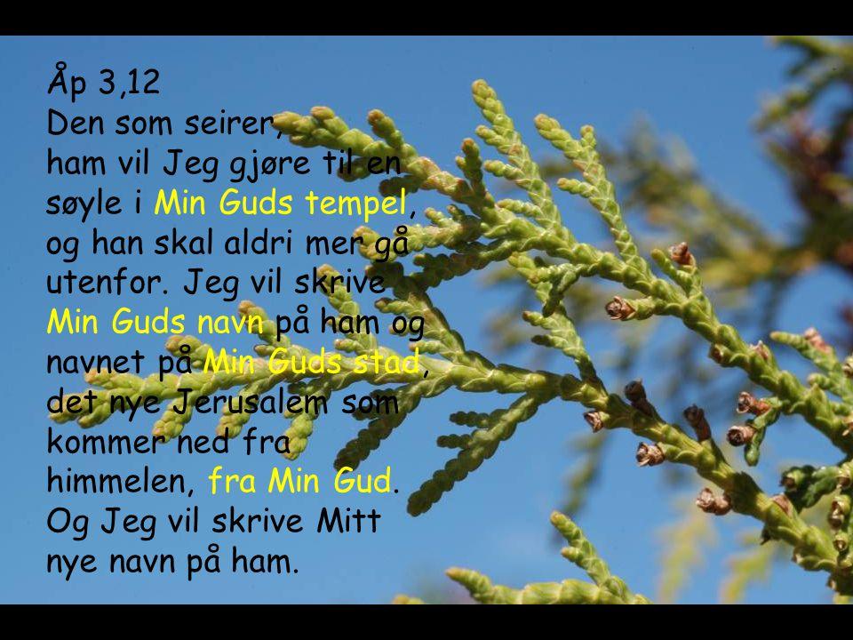 Åp 3,12 Den som seirer, ham vil Jeg gjøre til en søyle i Min Guds tempel, og han skal aldri mer gå utenfor. Jeg vil skrive Min Guds navn på ham og nav